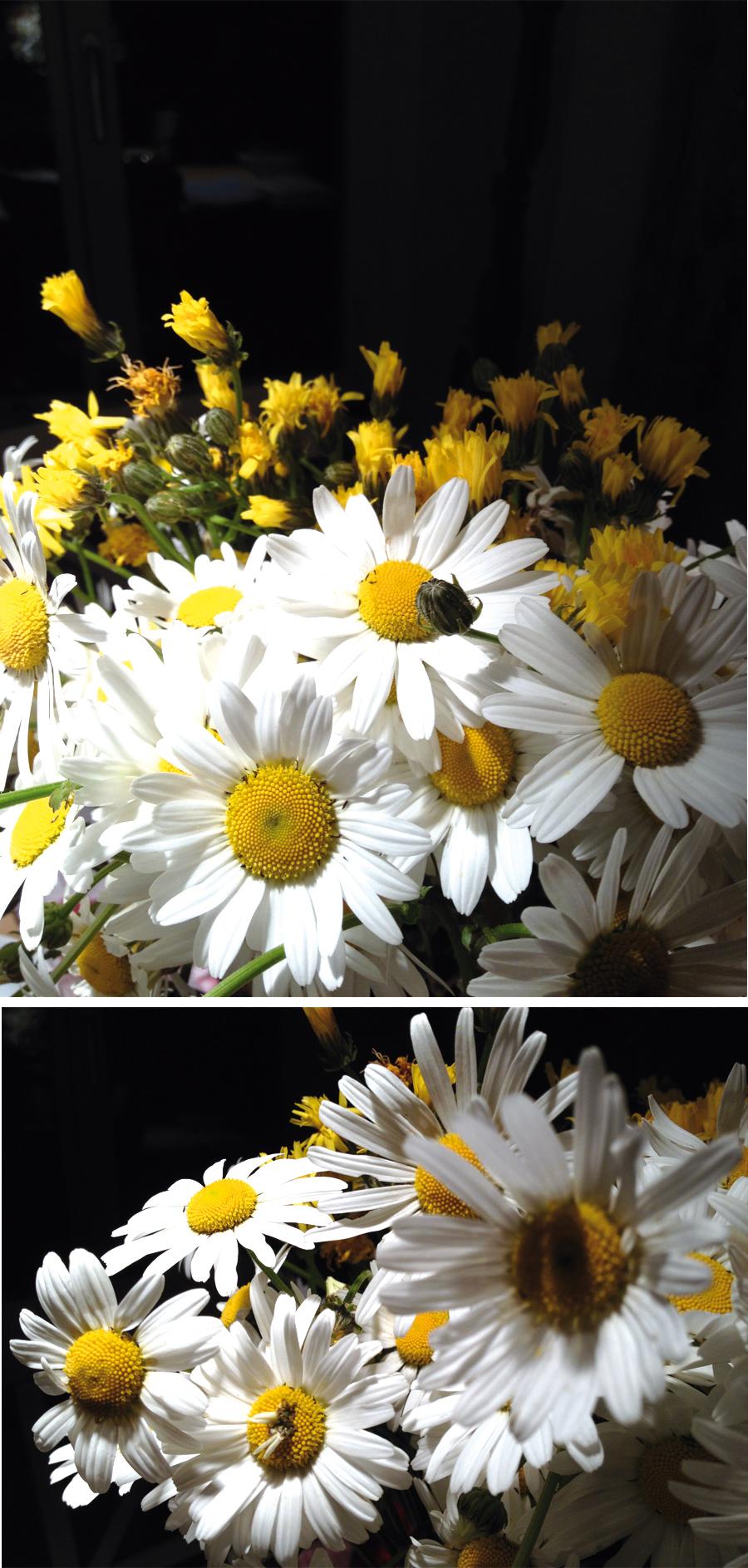 Flower_Blog_16