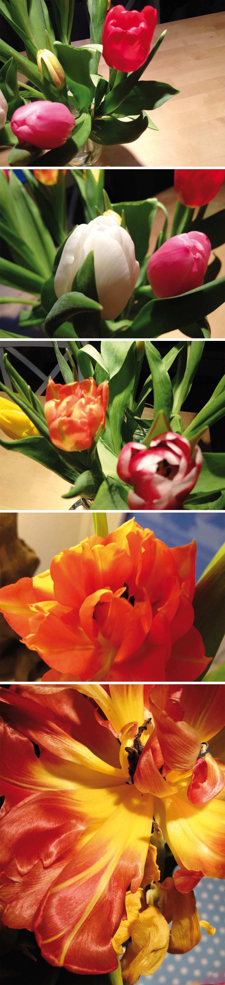 Flower_Blog_4